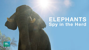 Elephants: Spy in the Herd (2003)