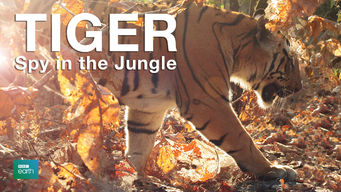 Tiger: Spy in the Jungle (2008)